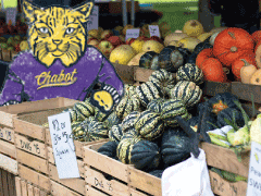 The Chabot Farmer's Market Is Back!